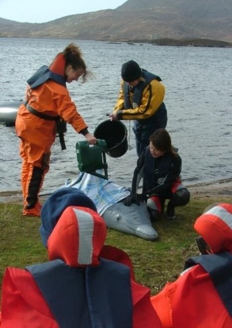 Learn how to help islands' water wildlife - Local Headlines - Stornoway Gazette   Ocean Conservation   Scoop.it