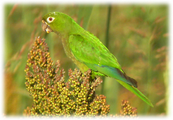 Belize Birding Tours | Belize in Social Media | Scoop.it