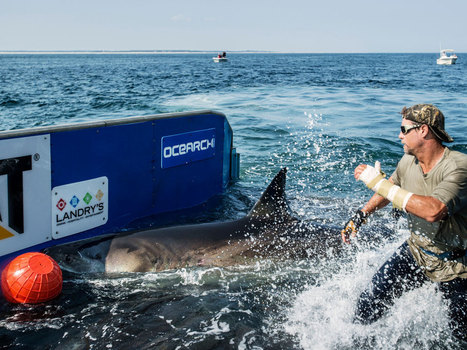Spending 15 Minutes With a Great White Shark on a Boat Deck | Xposed | Scoop.it