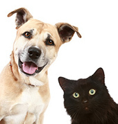 » Dog People, Cat People Have Different Personalities - Psych Central News   Wellspring News -- drink from the well!   Scoop.it