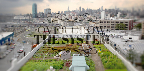 Urban Agriculture as a Vehicle for Social Change | Over Grow The ... | Urban Agriculture | Scoop.it