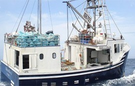 Nova Scotia importer, distributor can now supply sustainable wild Atlantic halibut to the US - SeafoodSource.com | Nova Scotia Fishing | Scoop.it