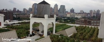 Amazing Farm Grows Local Food Atop a NYC Building | Maverly Lands | Scoop.it
