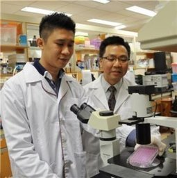 Common herbal-based anti-malarial drug effective in controlling asthma, study suggests | Erba Volant - Applied Plant Science | Scoop.it