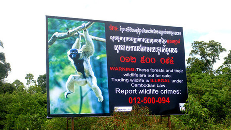 Terry Whittaker Photo Blog: Wildlife Trade Cambodia | Wildlife Trafficking: Who Does it? Allows it? | Scoop.it