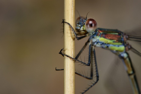 Dragonflies and damselflies - your reader photographs | Mes passions natures | Scoop.it