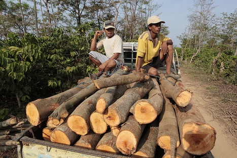 Local activism, political measures needed to stop illegal timber | oskreddy | Scoop.it
