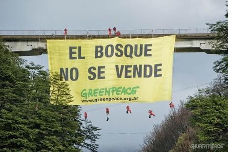 Greenpeace celebra que no se habiliten los mega-proyectos de @eidico en Villa La Angostura | La destruccion del medio ambiente en el cono sur | Scoop.it
