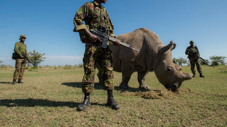 It Takes a Village to Protect a Rhino | Trends in online content | Scoop.it
