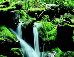 Le rôle de la nature dans notre bonheur   Le bonheur aujourd'hui   Scoop.it