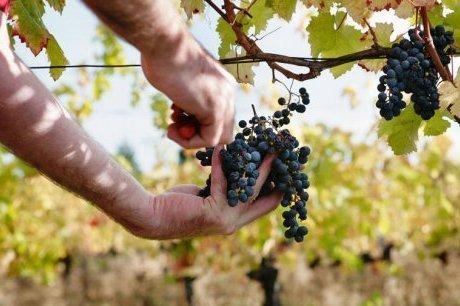 300 postes proposés pour les vendanges | Agriculture en Dordogne | Scoop.it