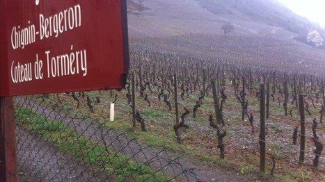 La dénomination Chignin-Bergeron est désormais officiellement délimité #Savoie   Le Vin et + encore   Scoop.it