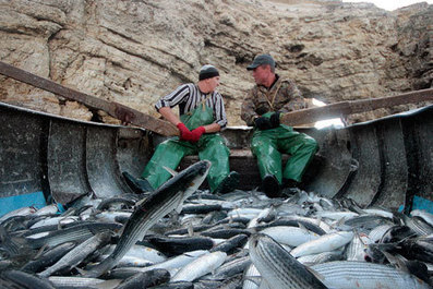 Russian fishing industry witnesses stable growth | Russia Beyond The Headlines | Aquaculture Directory | Scoop.it
