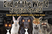 Bunny's Blog: End of the World Adoption Special | Pet News | Scoop.it
