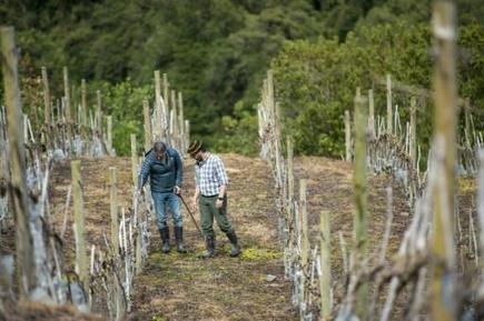 Chile's cold south makes wine in warming climate | Wine from Down Under | Scoop.it
