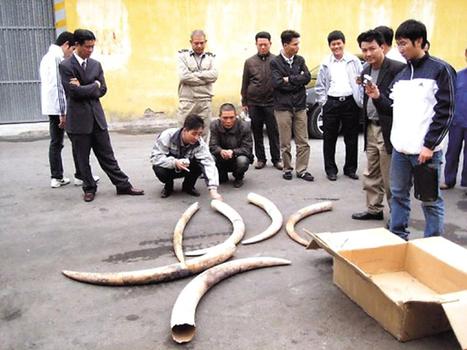 Asia fuels record elephant, rhino killings: WWF - The Korea Herald | Love | Scoop.it