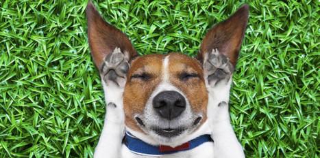 Le sommeil du chien en 10 questions - Femme Actuelle   Chiens et chats - comportement, santé et diététique   Scoop.it