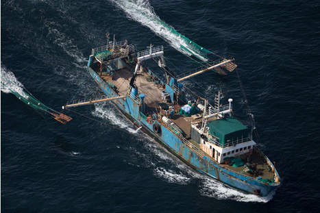 China's distant water fishing fleet growing unsustainably | Sustain Our Earth | Scoop.it