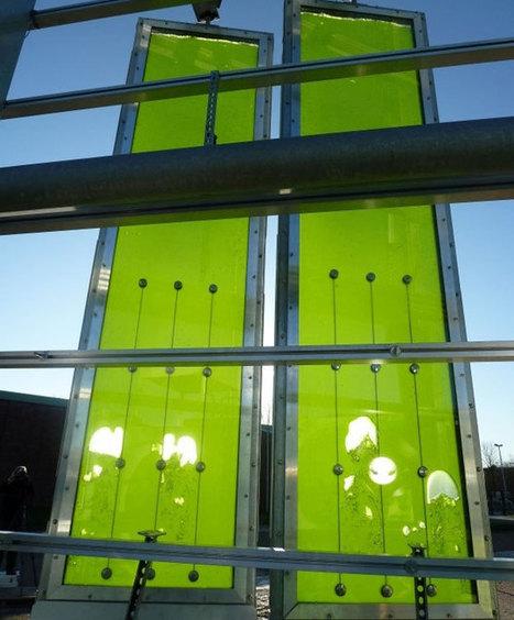 Des algues en façade fournissent l'énergie d'un immeuble passif - Batiweb.com | Rescoop -Faune - Flore - Environnement | Scoop.it