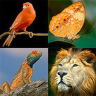 How Many Animal Species Inhabit Our Planet? | Exploring Different Species | Scoop.it
