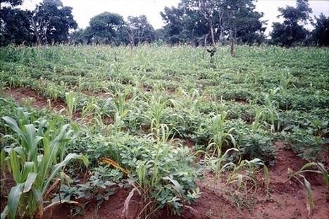 Les rendements de l'agriculture biologique, un quiproquo tenace | Questions de développement ... | Scoop.it