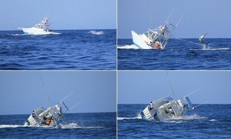 Marlin wins! Incredible photos show massive fish as it toppled over an entire boat and crew | All about water, the oceans, environmental issues | Scoop.it