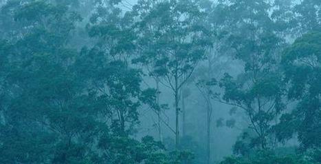¿Cómo compiten los árboles en el bosque para sobrevivir? - Actualidad Medio Ambiente   Actualidad forestal cerca de ti   Scoop.it