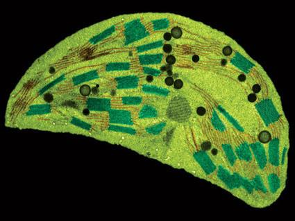 Instant Expert 30: Photosynthesis - New Scientist   Biology @ JIS   Scoop.it