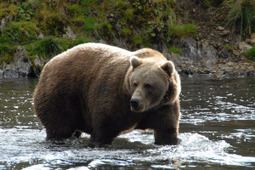 In Kodiak Alaska Fishing Vacations Can Be Fun | Afognaklodge | Scoop.it