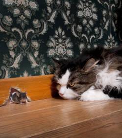 Un parasite fait perdre aux souris leur peur des chats | CaniCatNews-actualité | Scoop.it