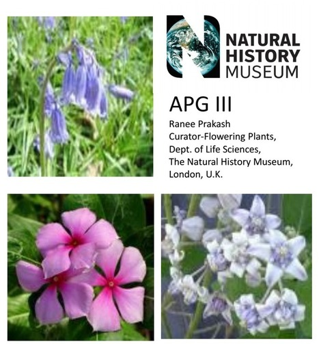 Molecular Systematics - APG III System of Classification of Flowering Plants | Indian Botanists | Scoop.it