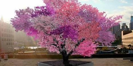 Cet arbre étonnant produit 40 variétés différentes de fruits | Merveilles - Marvels | Scoop.it