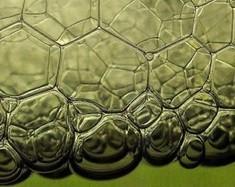 Biomimétisme: la vraie nature de l'économie collaborative ? | Économie circulaire locale et résiliente pour nourrir la ville | Scoop.it