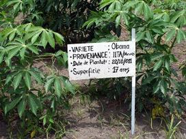 L'AgriBusiness Forum 2015 se tient à Kinshasa | Radio Okapi | CONGOPOSITIF | Scoop.it