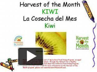 Harvest of the Month KIWI La Cosecha del Mes Kiwi | kiwi (Actinidia chinensis) | Scoop.it