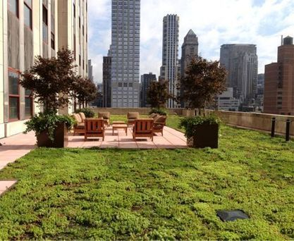 Greenroof Project of the Week for September 30, 2013: The Empire State Building | Jardines Verticales y azoteas verdes. | Scoop.it