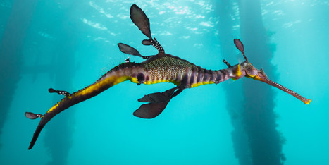 Seahorses Are Magic. Almost. | seafood marketing | Scoop.it