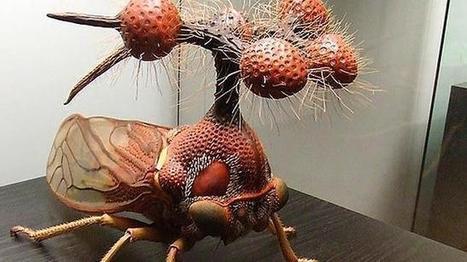 Los diez insectos más raros del mundo   Reflejos   Scoop.it