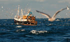 EU and fish quotas: Who will protect these fish from our feeding frenzy? | Food and Nutrition | Scoop.it