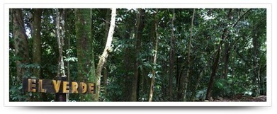 Flora Virtual de la Estación Biológica El Verde   Ecosentido   Scoop.it