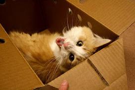 Animal Friends: Understanding Cat Behavior: Cranky Cats | Cat Stuff | Scoop.it