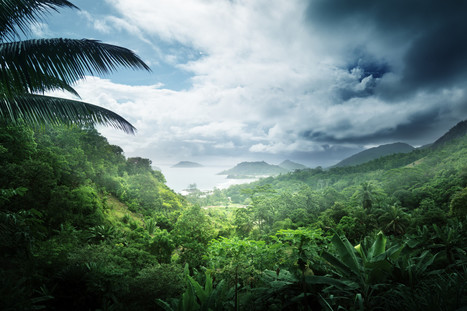 50 Astounding Facts About Rainforests (INFOGRAPHIC) - Huffington Post | Rainforests | Scoop.it