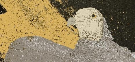 Pérou: Le vautour, ennemi numéro 1 de la pollution   Sociétés & Environnements   Scoop.it