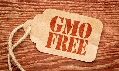 The New England Journal of Medicine Asks FDA to Reconsider Labeling GMO Foods | Food issues | Scoop.it