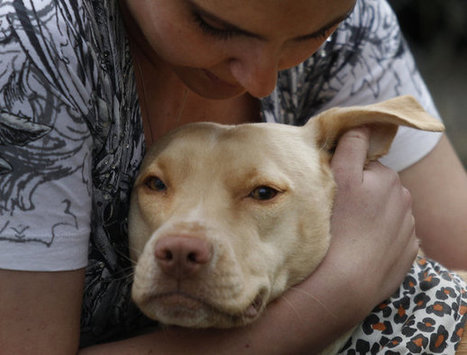 Shelters use social media sites to help pets find homes - Fort Worth Star Telegram | Family Pets | Scoop.it