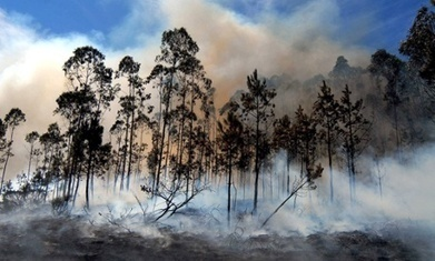 Europe's forests 'particularly vulnerable' to rapid climate change | forestry | Scoop.it