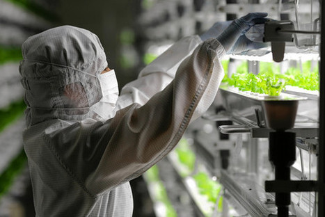 Fujitsu Lettuce? In Japan, idled electronics factories find new life in farming | Plant Biology Teaching Resources (Higher Education) | Scoop.it