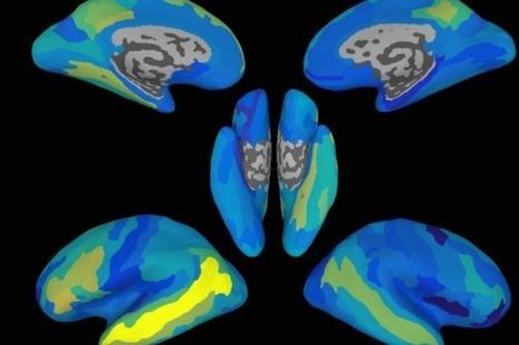 How the Brain Decodes Sentences | ADQUISICIÓN DE SEGUNDAS LENGUAS-SECOND LANGUAGE ADQUISITION | Scoop.it