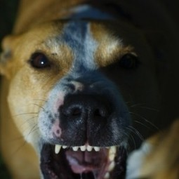 Dog Bite Injury Illinois | Chicago Dog Bite Lawyer | Cary J. Wintroub- Chicago Personal Injury Lawyer | Illinois Accident Attorney | Scoop.it