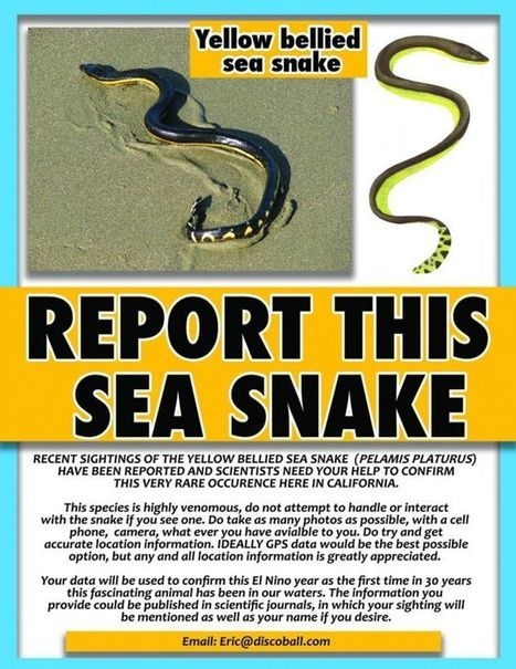 In rare sightings, venomous sea snakes seen on California beaches - SFGate | Natural Fears | Scoop.it